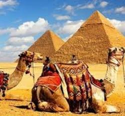 Забраняват язденето на камили