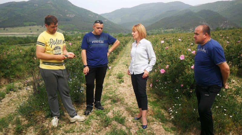 Мая Манолова: Министър Танева да обяви каква ще е помощта за розопроизводителите сега
