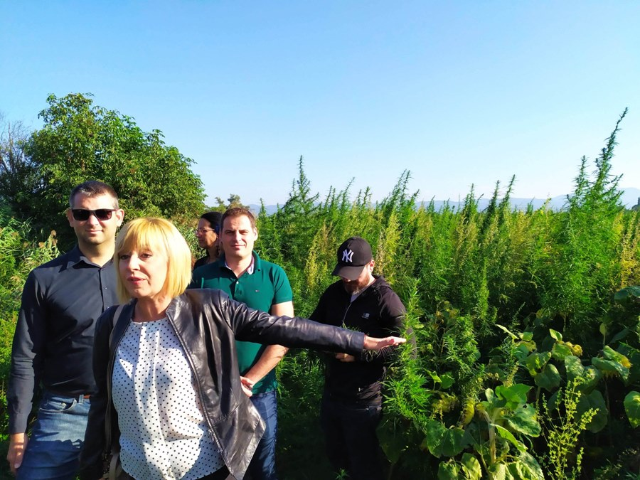 Манолова показа незаконна плантация с марихуана близо до околовръстния път на София